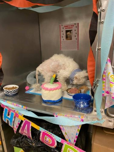 Festa do Sammy - Foto: Cincinnati Animal Care