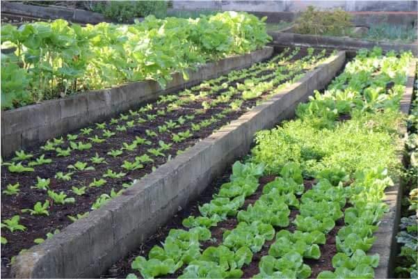 Horta comunitária do ICC - Foto: divulgação