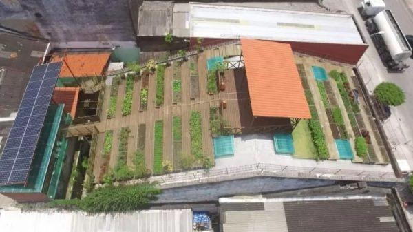 Imagem aérea da horta no telhado em um casarão do Recife - Foto: Agência JCMazella