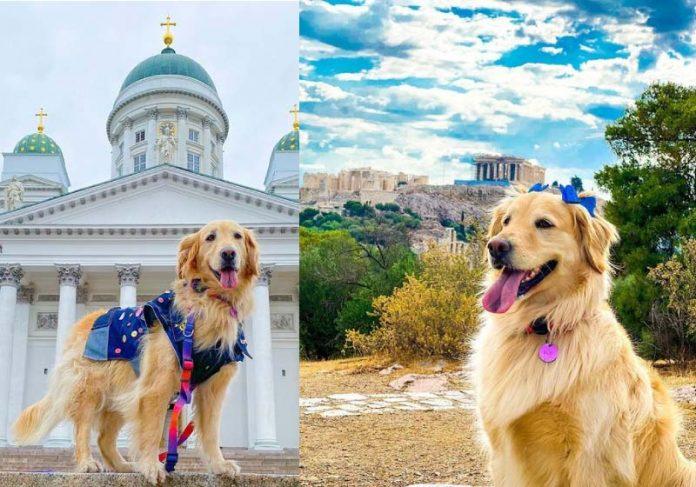 A cadelinha Lilo já viajou por 30 países com os tutores Lilo e os tutores Talita e Rubens - Foto: Reprodução/ Instagram @lilomochileira