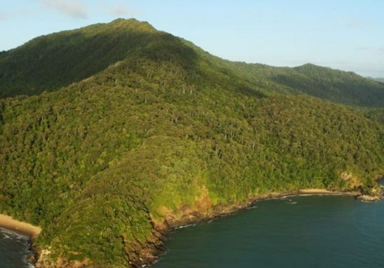 Acordo histórico marcou a entrega da floresta aos aborígenes, na Austrália - Foto: reprodução