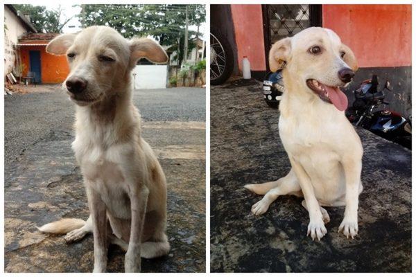 A Agusta quando foi resgatada e agora - Fotos: Arquivo pessoal/Jeferson Rodrigues
