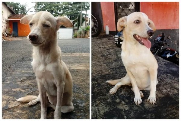 Agusta antes e depois do resgate - Foto: arquivo pessoal