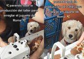 A cadelinha Roma fez sucesso enquanto esperava o tutor costurar a o brinquedo de pelúcia dela que rasgou - Foto: reprodução TikTok