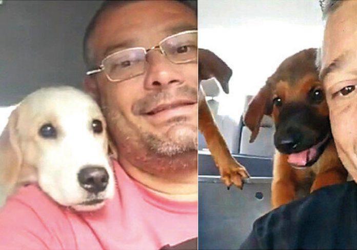 Motorista de Taxi Dog viraliza com vídeos fofos - Foto: reprodução